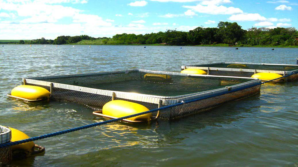 Tanques rede o que s o tanques rede iarema for Jaulas flotantes para piscicultura