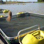 racao-para-os-peixes